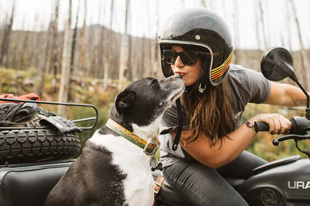 Motorcycle Sidecar with Dog